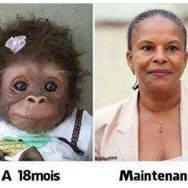 Taubira-singe-