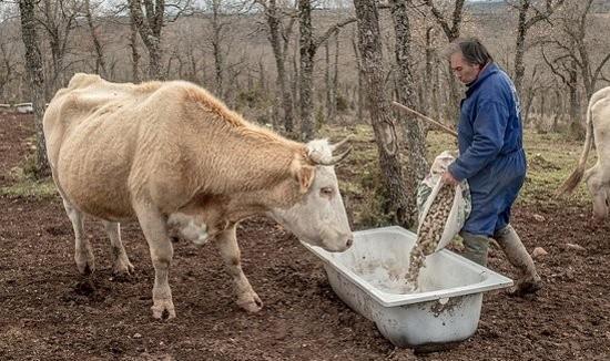 autriche_pensions_agriculteur_envahisseur
